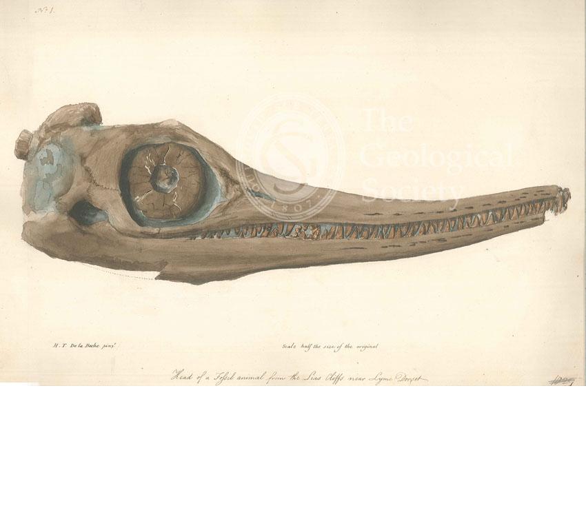 Skull of an Ichthyosaur