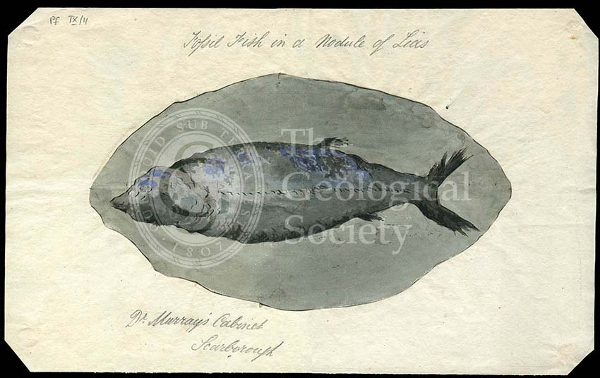 'Fossil fish in a nodule of Lias'
