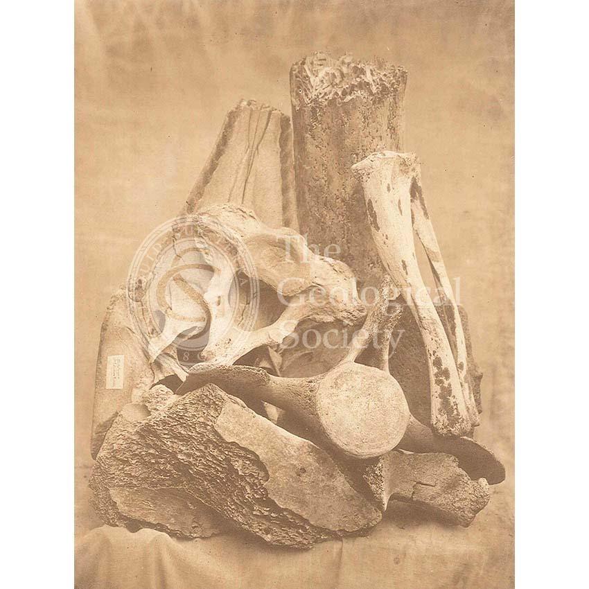 Whale bones from Spitzbergen