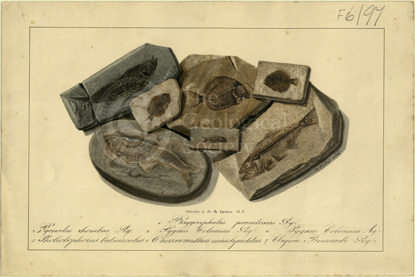 Fossil Fish of Sir Philip de Malpas Grey Egerton