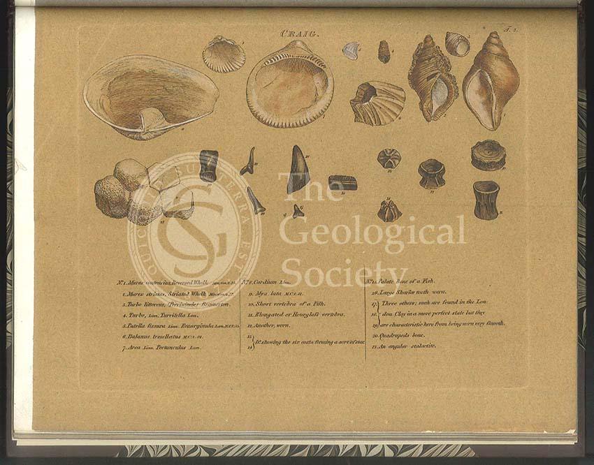 'Craig' [Crag] fossils