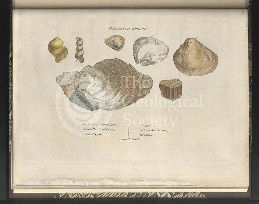 Portland Stone fossils