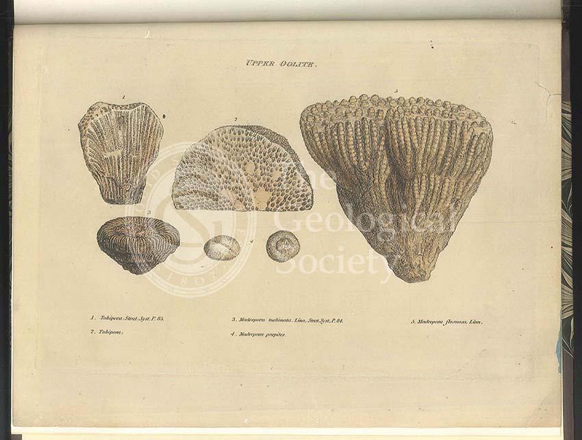 Upper Oolite fossils