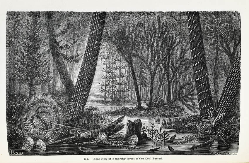 Ideal view of a marshy forest of the Coal Period