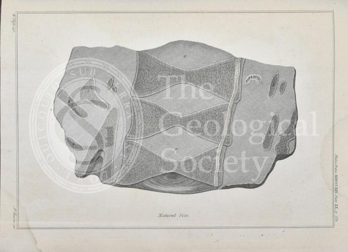 Section through the vertebrae of an ichthyosaur