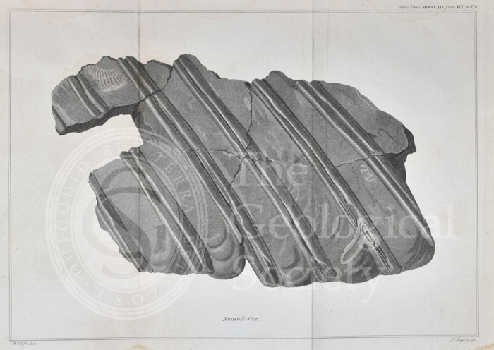 Ribs of an ichthyosaur
