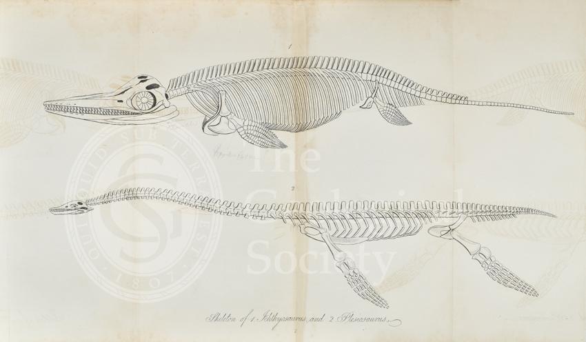 'Skeleton of Ichthyosaurus and Plesiosaurus'